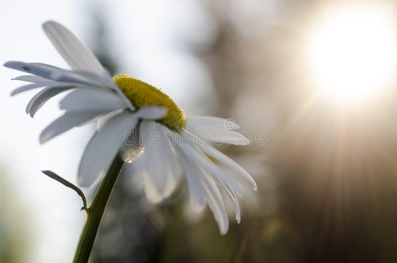 在芬兰自然的花 图库摄影