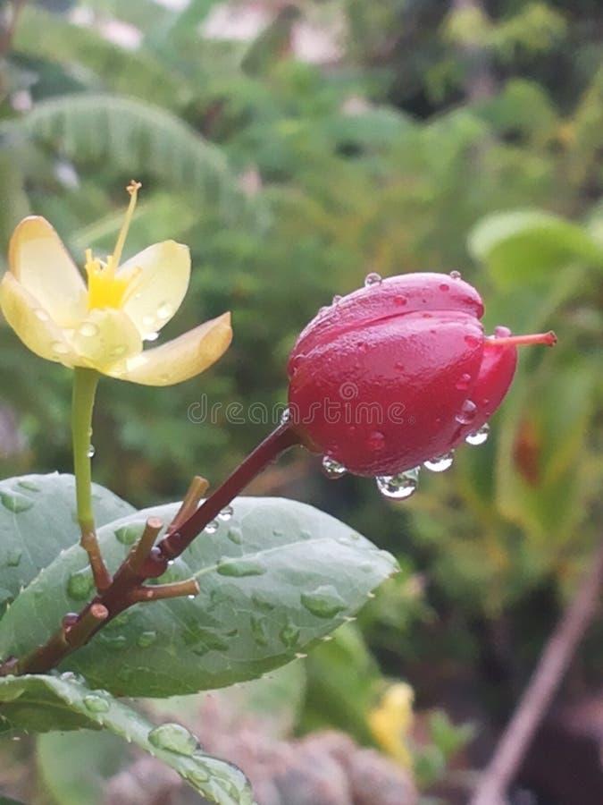 在花和植物的露水 库存照片