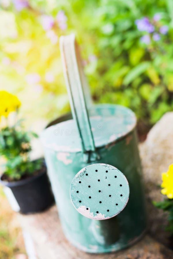 在花床上的老绿色喷壶在庭院里 免版税库存照片
