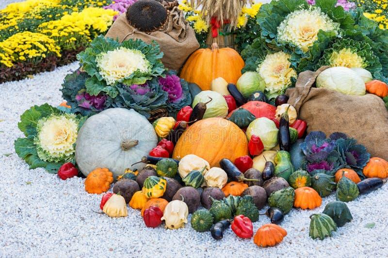 在花床中的新近地被收获的夏天菜 室外大秋天收获的构成 免版税库存照片