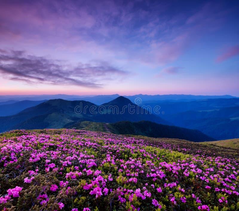 在花开花和日出期间的山 在山小山的花 免版税库存照片