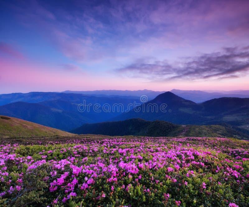 在花开花和日出期间的山 在山小山的花 免版税图库摄影