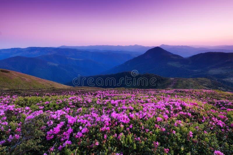 在花开花和日出期间的山 免版税库存照片