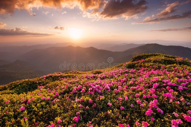 在花开花和日出期间的山 库存图片