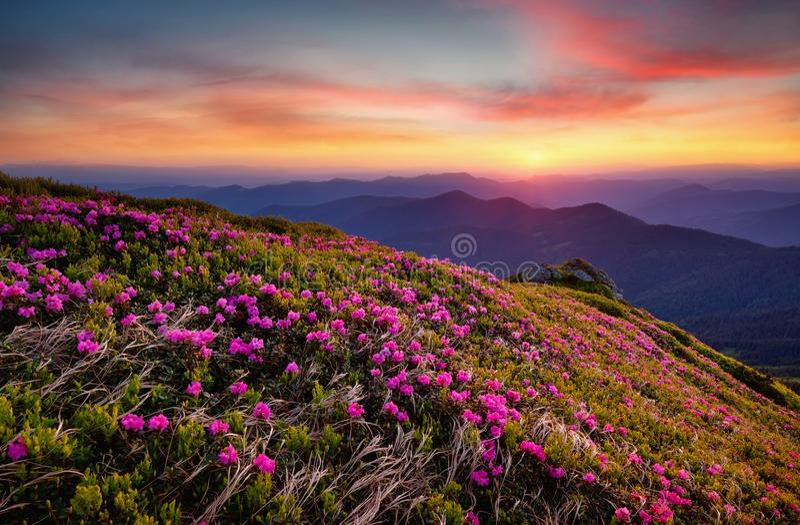 在花开花和日出期间的山 库存照片