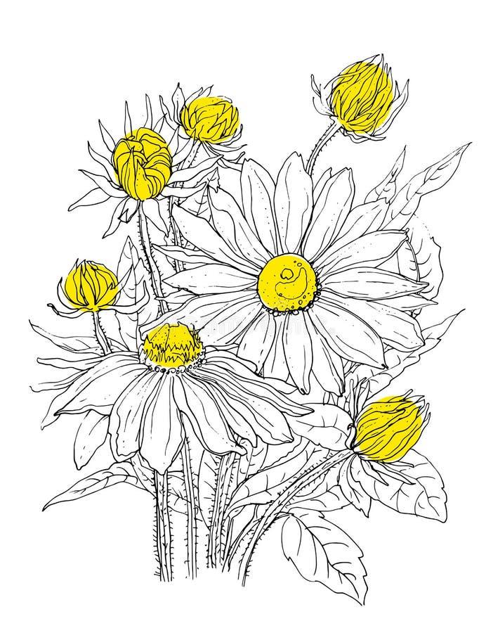 在花束的雏菊花 向量例证