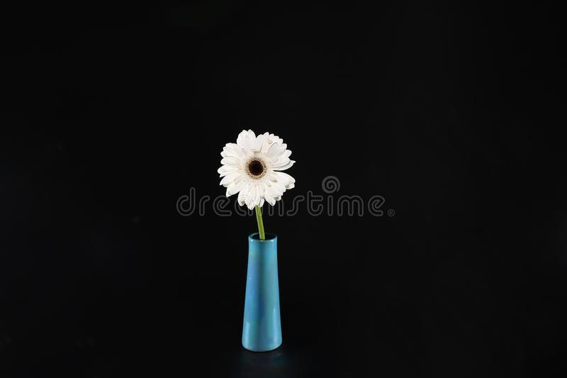 在花瓶的戴西花 免版税图库摄影