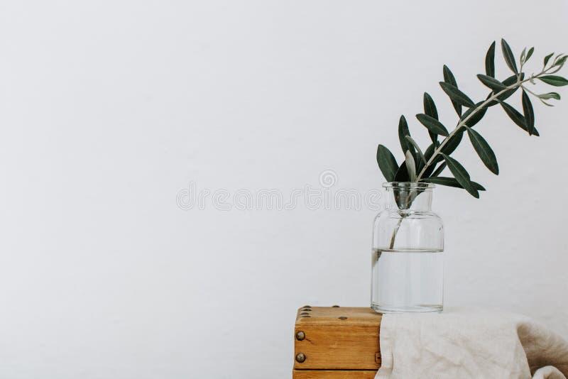 在花瓶的橄榄树枝 最小的背景 库存图片