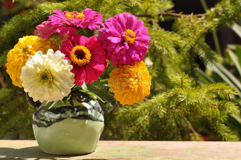 在花瓶的百日菊属花 图库摄影