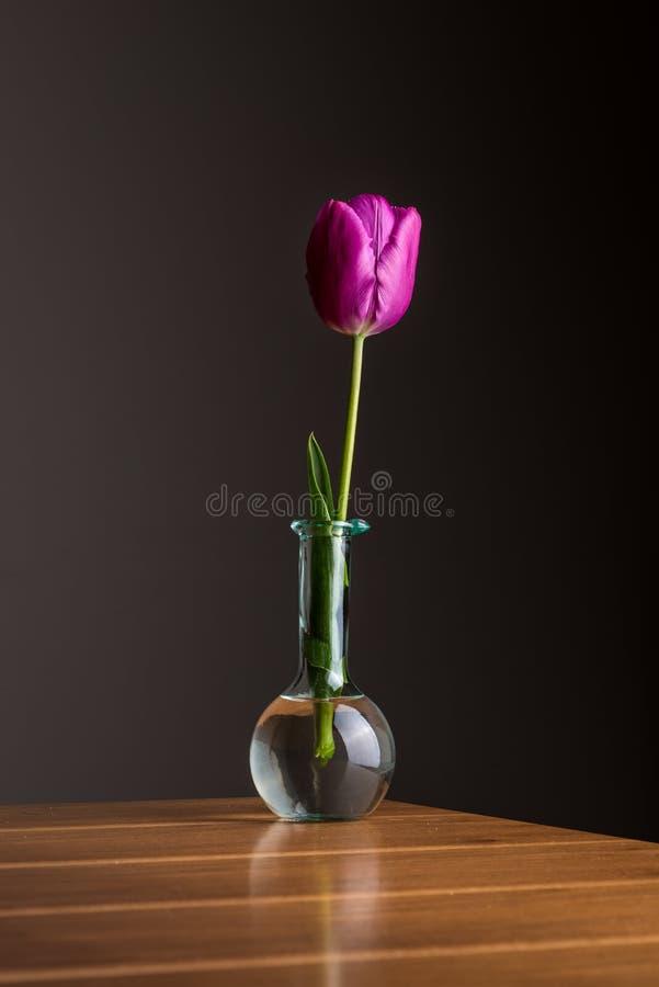 在花瓶的红色郁金香 库存图片