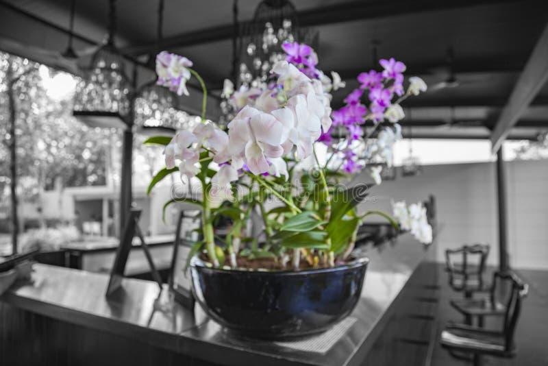 在花瓶的美丽的桃红色和紫罗兰色兰花 库存图片
