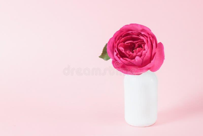 在花瓶的美丽的桃红色花在与拷贝空间的桃红色背景 与春天花的静物画 免版税库存照片