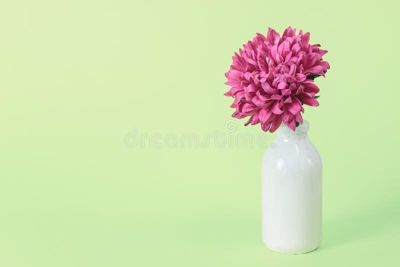 在花瓶的美丽的桃红色花在与拷贝空间的桃红色背景 与春天花的静物画 库存照片