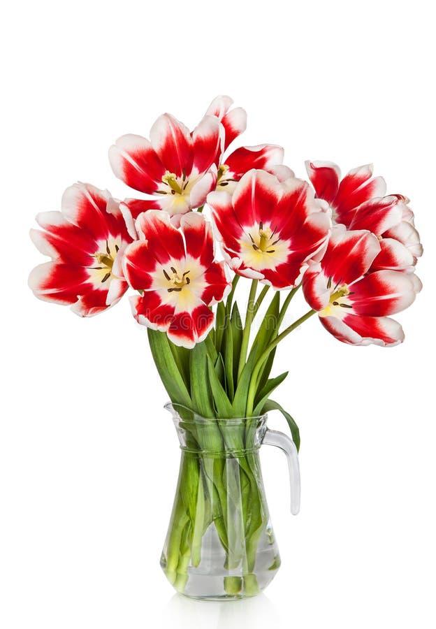 在花瓶的美丽的红色郁金香花花束 免版税图库摄影