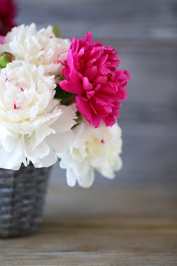 在花瓶的褐红和白色牡丹 免版税库存图片