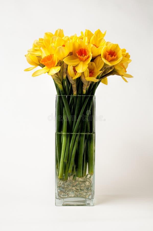 在花瓶的黄水仙 库存图片