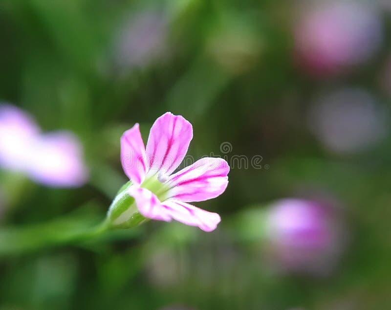 在花的下落 库存照片