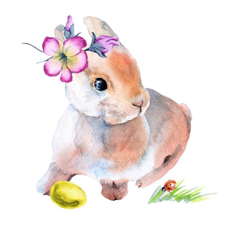 在花的复活节兔子用复活节彩蛋 查出在背景 向量例证