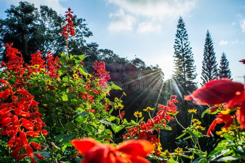 在花的太阳 库存图片