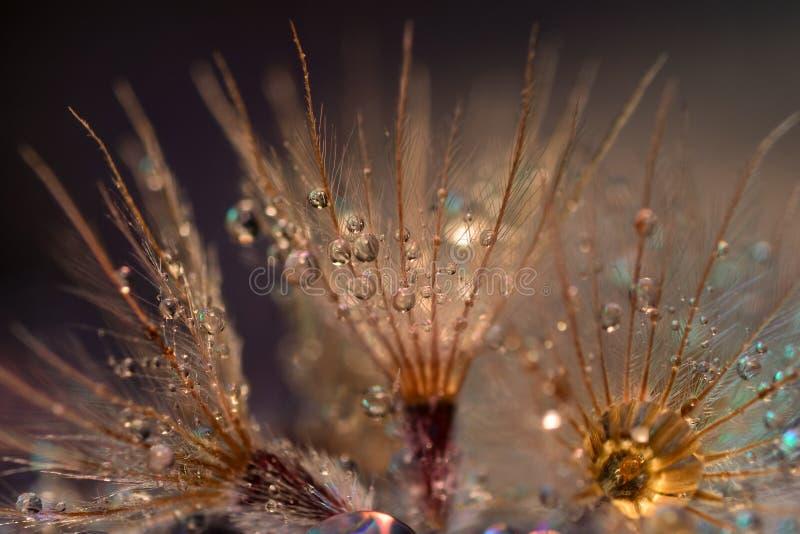 在花的美好的水下落 库存图片