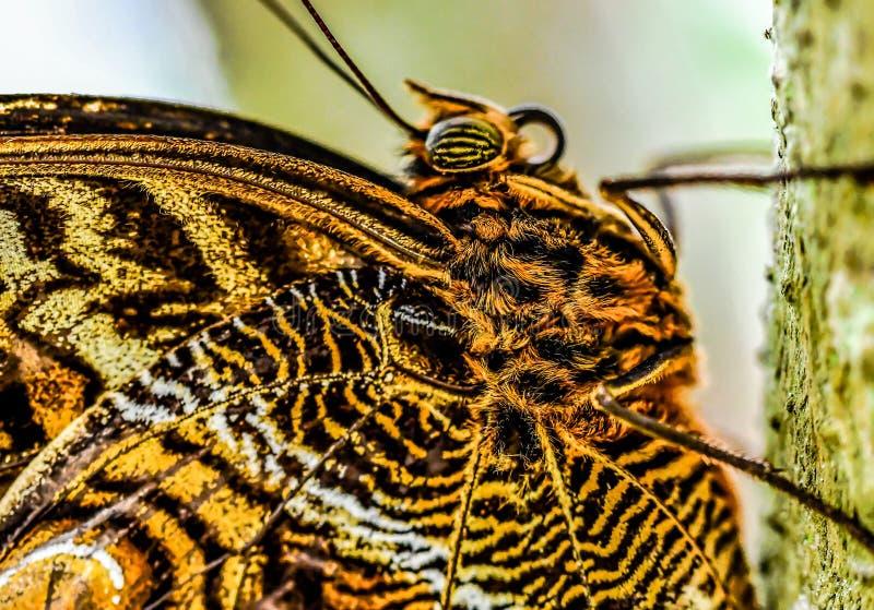 在花的蝴蝶,照片作为背景 免版税图库摄影