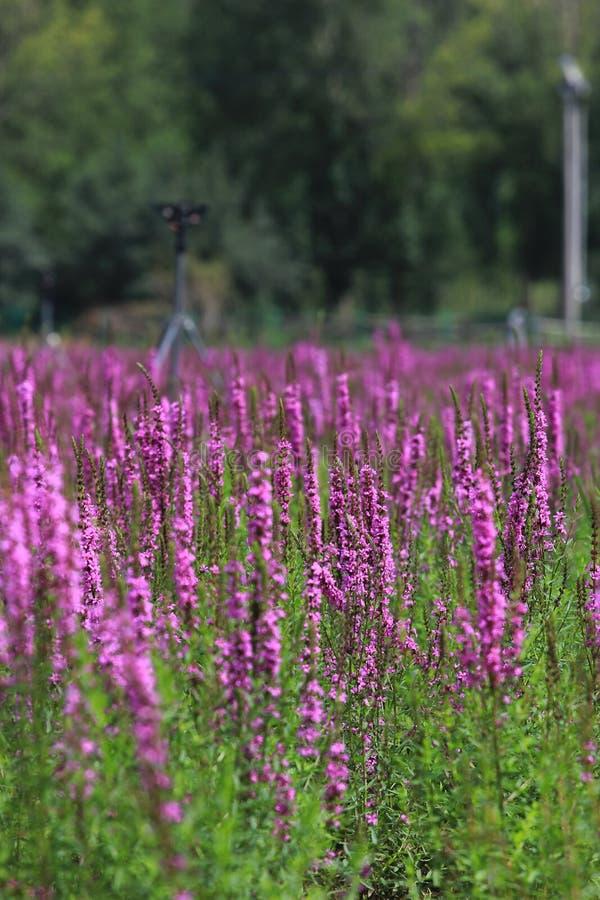 在花的颜色 免版税库存照片