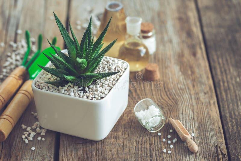 在花盆、微型园艺工具和顺势医疗药方的Haworthia多汁植物对植物 图库摄影