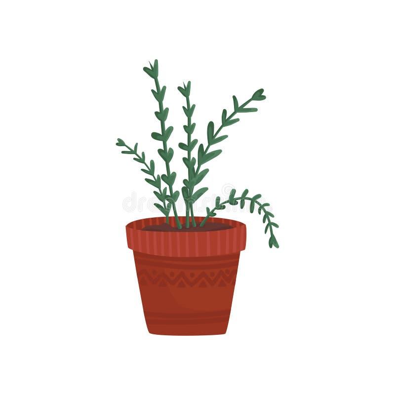 在花盆、迷迭香或者牛至的草本在一个棕色罐动画片传染媒介例证 库存例证