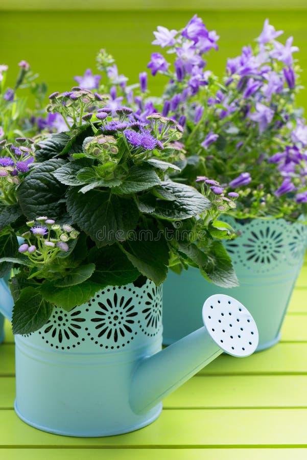 在花盆的不同的春天花 库存照片