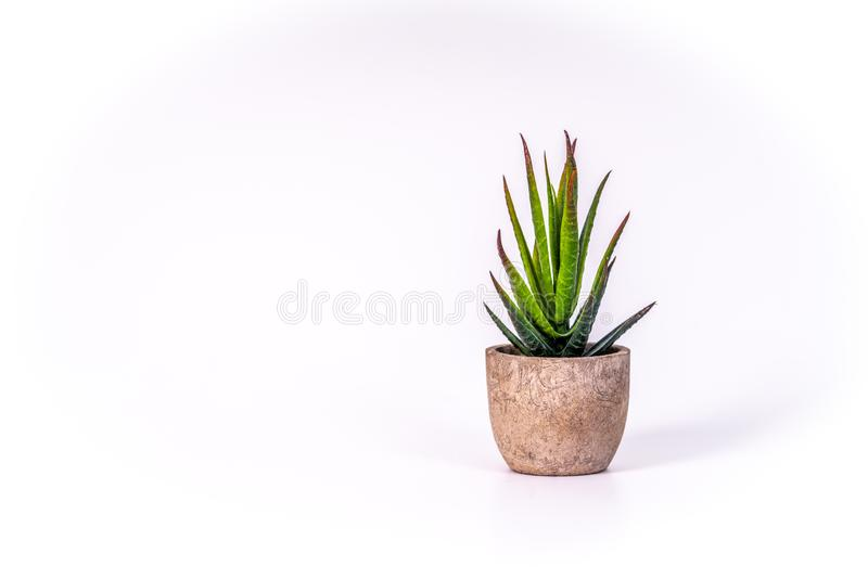 在花盆的小沙漠植物由木头制成 库存照片