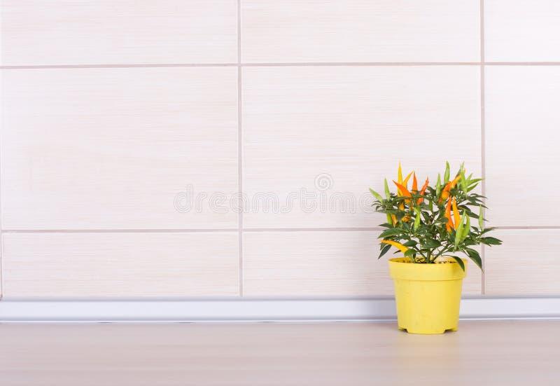 在花盆的胡椒在厨台 库存照片