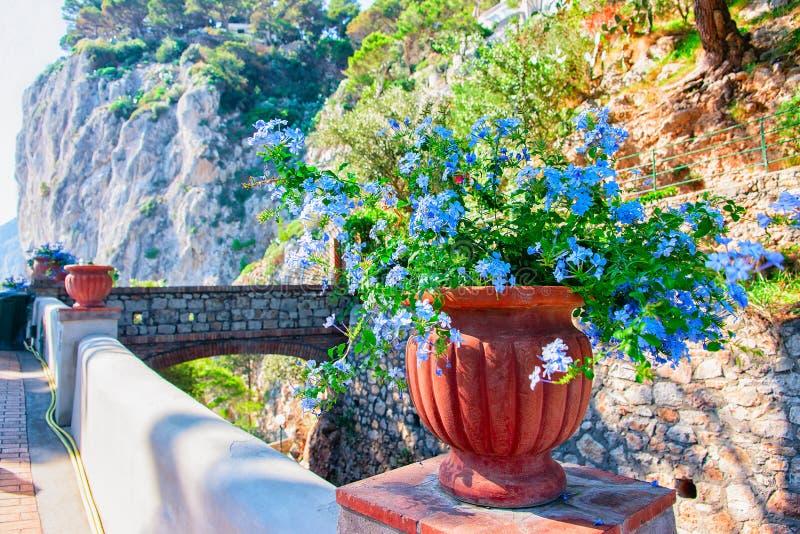 在花盆的花在奥古斯都庭院在卡普里岛海岛 库存照片