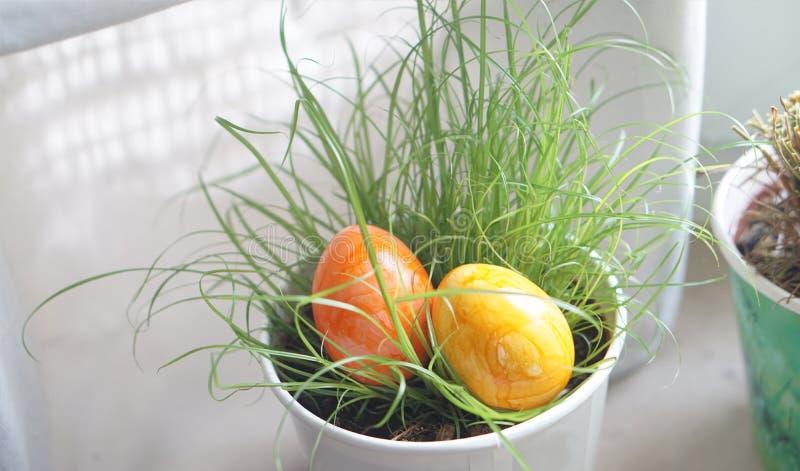 在花盆的草掩藏的两个复活节彩蛋在室内 免版税库存图片