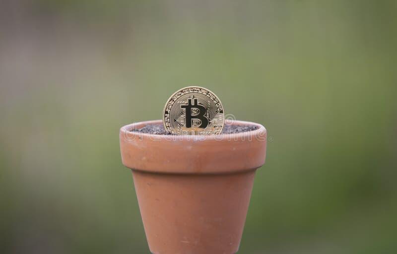 在花盆的Bitcoin充满土壤 免版税库存图片