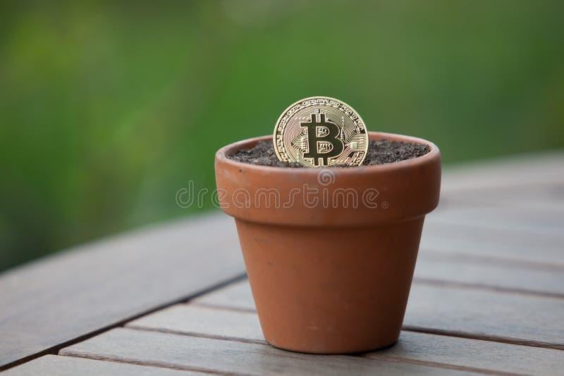 在花盆的Bitcoin充满土壤 免版税库存照片