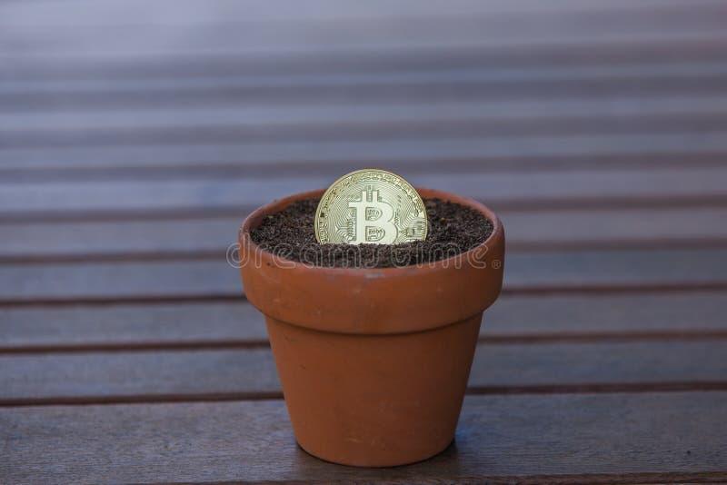 在花盆的Bitcoin充满土壤 库存图片