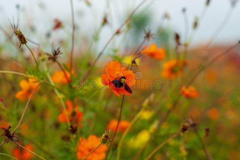 在花种植园,模糊的背景弄糟蜂 图库摄影