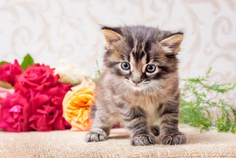 在花花束附近的一只小的小猫 问候的玫瑰与 免版税库存照片