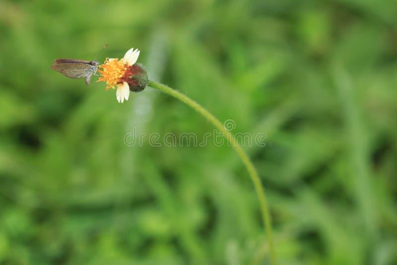 在花草的蝴蝶 免版税库存照片