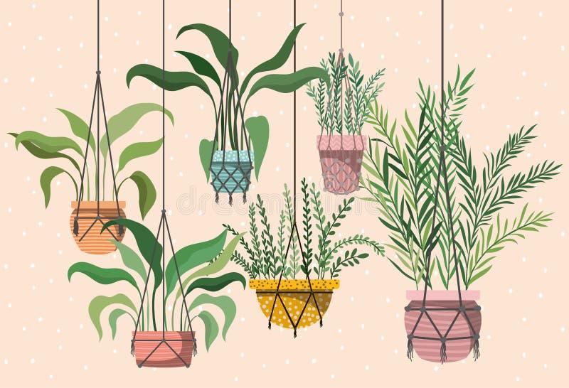 在花边挂衣架的室内植物 库存例证