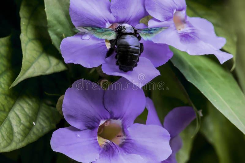 在花附近的一只快活的蜂 免版税库存照片