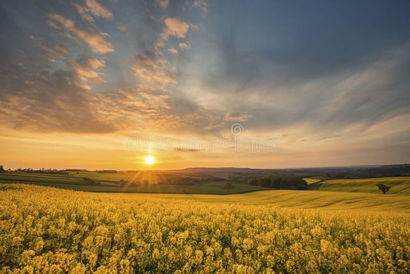在英国乡下领域的动态日出 免版税库存照片