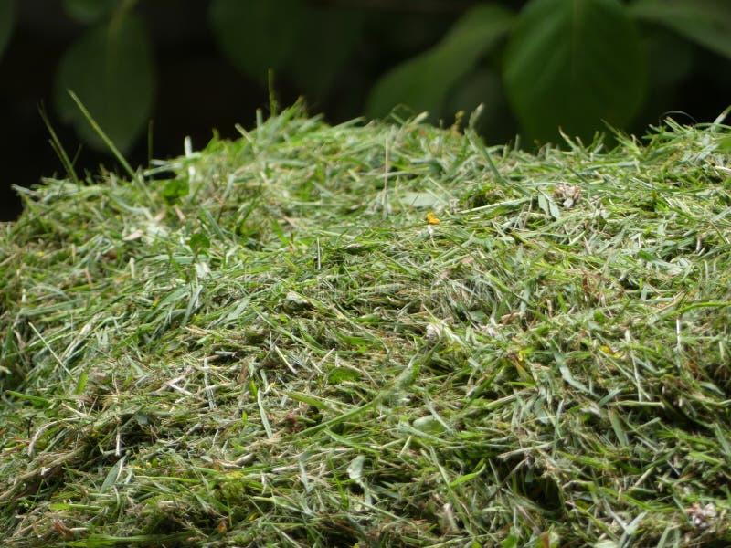 在英国新近地切开堆草剪报或切口、被割的草坪或者庭院 图库摄影