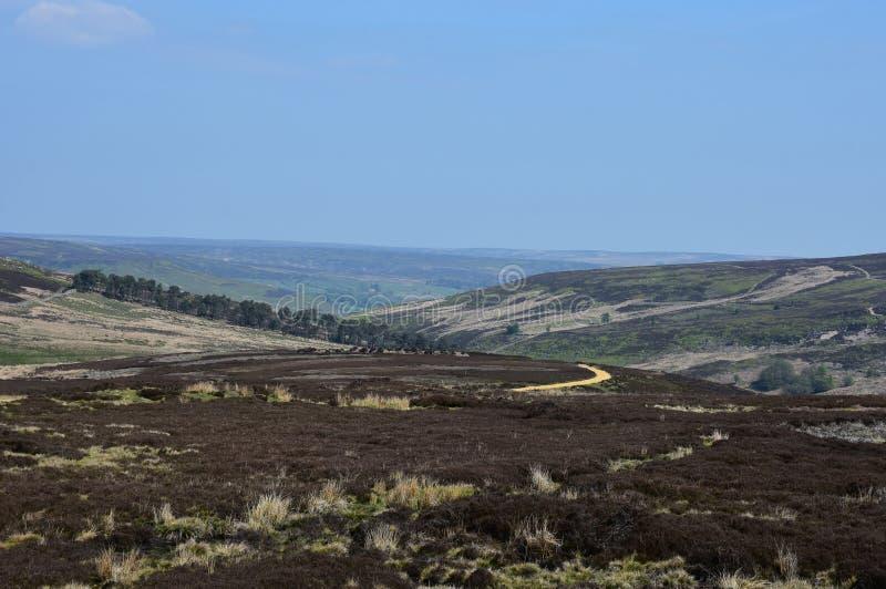 在英国的小山的狂放的海瑟和荒野辗压 免版税库存图片