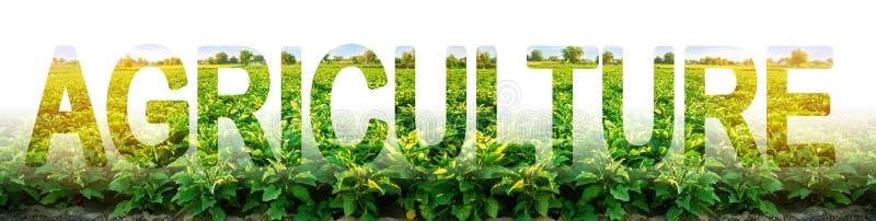 在茄子种植园的背景的题字农业 使用现代集成的解决方案增加 库存图片