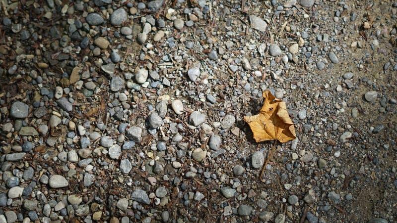 在茫茫荒野中叶子 库存照片