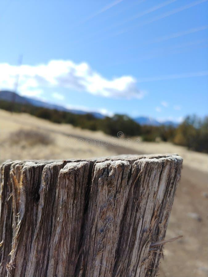 在茫茫荒野中树桩 库存照片