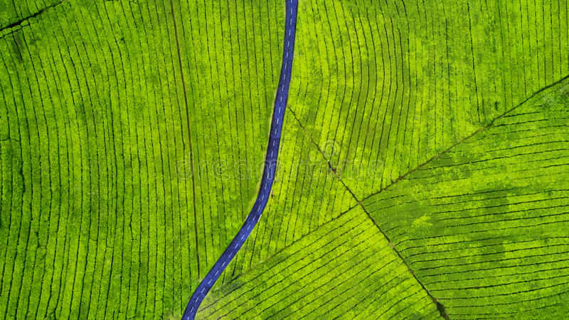 在茶园的空的高速公路 图库摄影