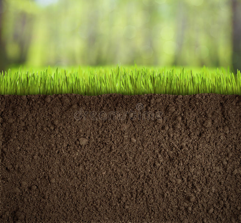 在草下的土壤在森林里 库存照片