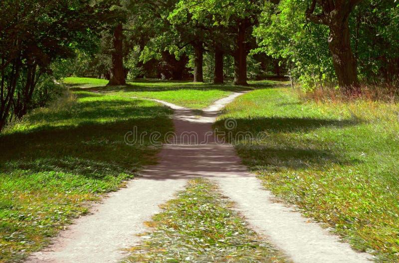 在草中的两条人行道在公园相交在一个明亮的晴朗的夏日 图库摄影